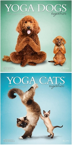 Yoga Dogs and Cats